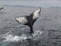 迫力満点のクジラのアクション