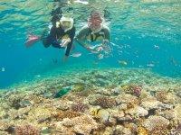 餌付けで熱帯魚と一緒に泳ごう!