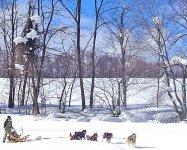 《真っ白な雪原のピュアな幸せ体験》 ワンちゃん達と一緒に楽しみましょう!