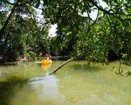 流れの穏やかな「億首川」のマングローブ林を進む、わくわくのアドベンチャー!
