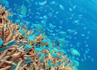 世界でもトップクラスの透明度!たくさんの海の生きものたちに出会えます!