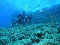 1日コースは、ポイントを変えて最大3ダイブが体験可能!慶良間のメインエリアである座間味島・渡嘉敷島周辺で体験ダイビングが楽しめます!