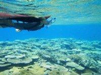 透明度の高い海とカラフルなお魚たち…海の環境の豊かさ、貴重さをあらためて体感することができますよ!