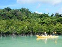 シットオントップタイプのシーカヤックを漕ぎながら、水辺の自然とマングローブを観察しましょう!