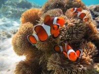 シュノーケリングで熱帯魚観察!