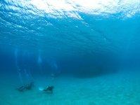 透明度の高い海でお魚ウォッチング