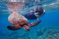 透明度抜群!美しい屋久島の海を満喫しよう!