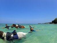 夏季は馬と一緒に海で遊べるコースもあり!