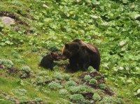近くで安全にヒグマを見ることができます!その近さは、ヒグマが岩をひっくり返す音が聞こえるほど!