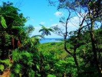 滝の上からの眺め。ジャングルの向こうに海が!