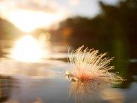夏限定!幻の花サガリバナを見れるプランあり!