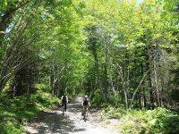 支笏湖周辺の林道を疾走!