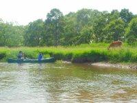 釧路湿原は野生動物たちの住処です♪