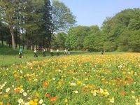 色とりどりのお花が咲き乱れるお花畑