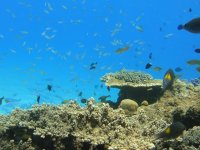 サンゴと生き物の宝庫