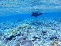 浅瀬に広がるサンゴ礁でシュノーケリング