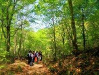 ガイドの知識にびっくり!世界遺産の森がもっと魅力的に見えてきます!