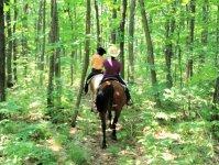 カウボーイハットをかぶって、馬と一緒に森を旅しよう!