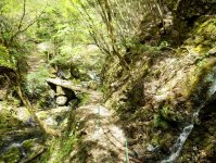 木漏れ日と清流が美しいフィールドへ