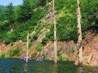 水中からのびる立ち枯れた木!