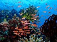 とってもカラフル!西表島の海は見るものを飽きさせません!