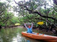 木々が茂るマングローブでゆったりカヌー!
