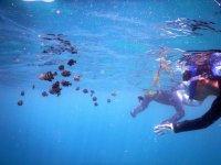 クリアブルーの海で魚と泳ごう!