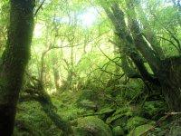 神秘的な屋久島の森へ踏み込もう(白谷雲水峡)