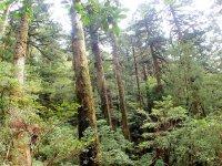 スケール満点の屋久杉の森へ!(ヤクスギランド)