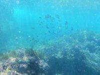 水深5mの水中世界をのぞいてみよう