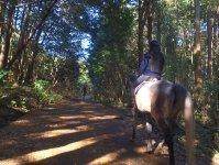 馬に乗りながら森林浴