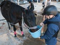 乗馬後には馬に水やり体験ができます