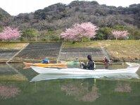 水面に映る桜も見どころの1つ