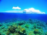ベストダイビングエリア1位!石垣島の海は透明度バツグン