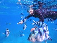 石垣島の魚たちと一緒に泳ごう!