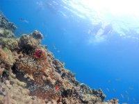 ガラスの様に透明な石垣島の海