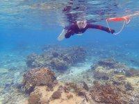 生き物が豊富な海中の世界を満喫する「シュノーケリング」