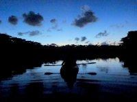 夜のマングローブを探検!ナイトコース!
