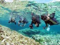 透明度の高い海ではカラフルな生き物がたくさん!