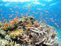 世界屈指のすばらしいサンゴやカラフルな魚たち
