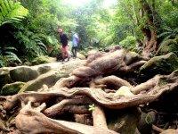太古のジャングルを探検しに行こう!