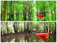 スケールが違う!広大なマングローブの森をカヤックで満喫!