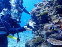 サンゴの影に隠れたニモを発見!