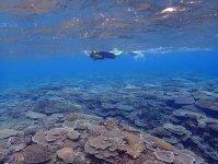 一面に広がるカラフルなサンゴは息をのむ美しさ!