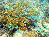 水中にはカラフルなお魚や珊瑚がいるポイントも!