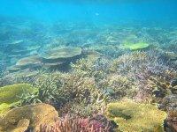 海底で生息する美しいサンゴや色とりどりの魚たち