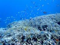 珊瑚や色鮮やかな魚が!