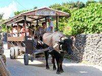 水牛車チケットも付いてお得な竹富島上陸プラン