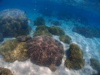 白い底砂とサンゴ礁がきらめく海を満喫