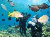 熱帯魚たちへ餌やり体験